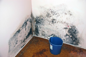 San Diego mold removal