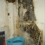 mold abatement and removal San Diego CA