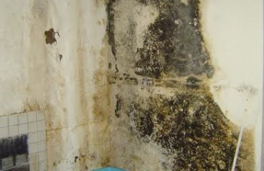 Water Flood And Mold Damage Require A Quick Response