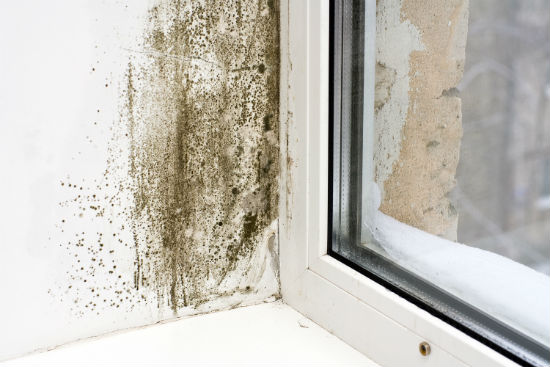 mold prevention tips San Diego CA